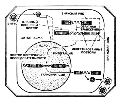 Краткооб итогах развития вирусологии