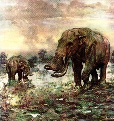 灭绝动物资料和图片9喜欢的进要回帖啊)