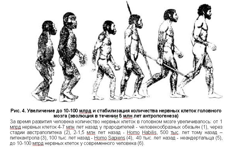 развитие человека началось